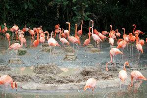 Flamingo Pond in Jurong Bird Park